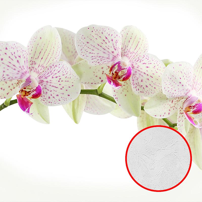 Фотообои Divino C-394 Фактура живопись Винил на флизелине (3*2,7) Белый, Цветы
