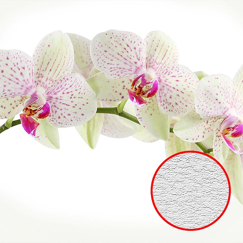 Фотообои Divino C-394 Фактура песок Винил на флизелине (3*2,7) Белый, Цветы