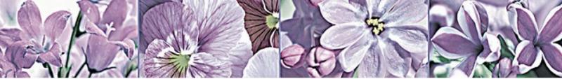 Керамический бордюр Нефрит Керамика Фокстрот фиолетовый 7х50 см недорого