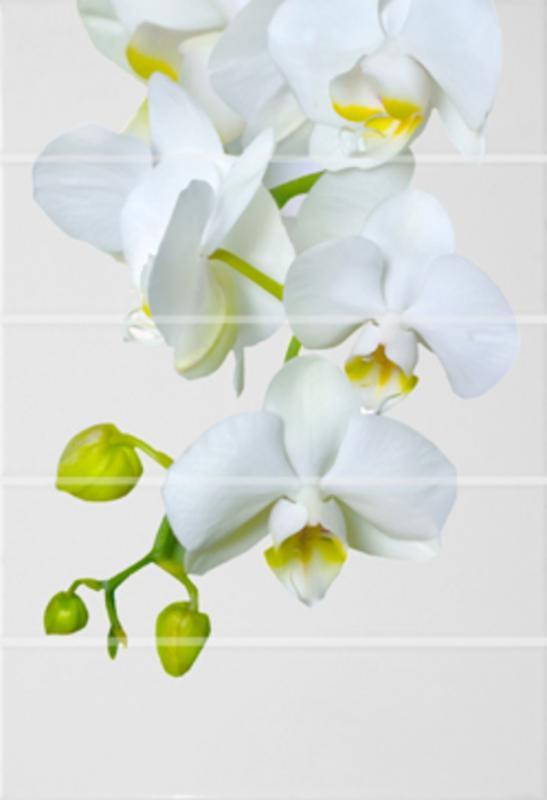 Керамический декор Alma Ceramica Флер ВС7ФЕ021 24,9х36,4 см керамический декор alma ceramica дель маре вс9дм644 24 9х50 см