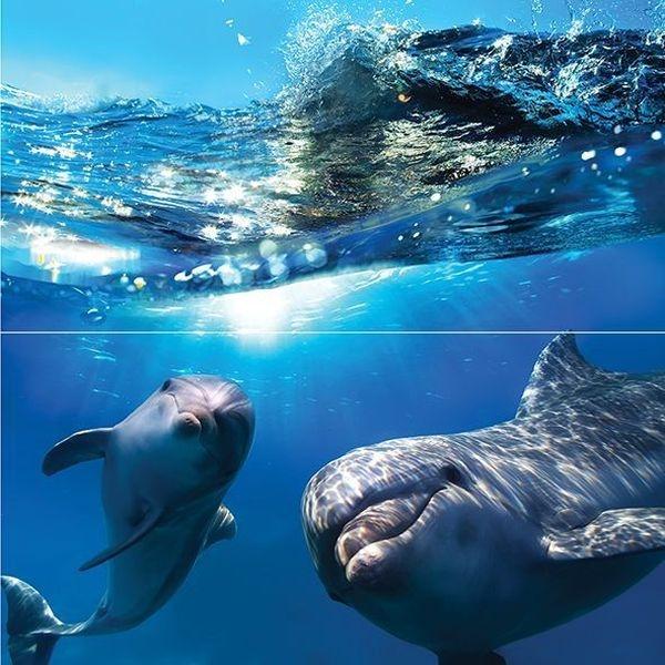 Стеклянное панно Ceramica Classic Dolphins 50х50 см