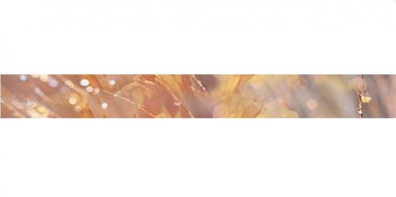 Керамический бордюр Ceramica Classic Flowers B400D205 4,5х40 см