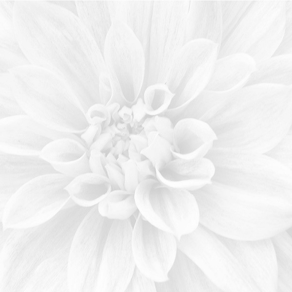 Керамическое панно Ceramica Classic Sigma Crisantemo 36-05-00-463-0 60х60 см керамическое панно ceramica classic peony 40х50 см